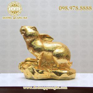 Chuột mạ vàng